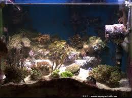 eclairage led pour aquarium eau de mer nano aquarium récifal de 100 litres en méthode dsb