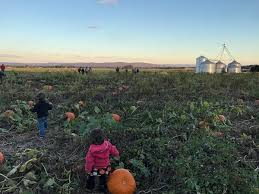 Pumpkin Patch Jacksonville Al by North Alabama Real Estate And Homes For Sale In North Alabama Re