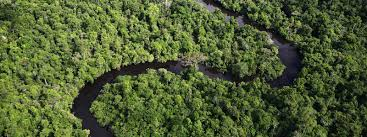 amazonia si e social amazon places wwf