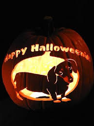 Boston Terrier Pumpkin Pattern by How To Carve Pumpkins To Look Like Your Dog Or Cat Baxterboo