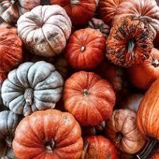 Hartsburg Pumpkin Festival 2015 Dates by October