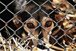 Shelters & Rescues Find Pet Services News Reviews and Information