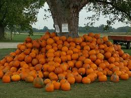 Kent Island Pumpkin Patch by Ohio Pick Your Own Pumpkin Patches Funtober