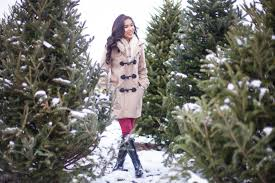Fraser Fir Christmas Trees Uk by Choosing A Christmas Tree Duffle Coat Hunter Boots Color U0026 Chic