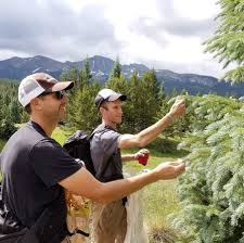 Christmas Tree Permits Durango Colorado by Durango Herald
