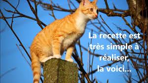 très efficace répulsif chats naturel écologique avec seulement 2