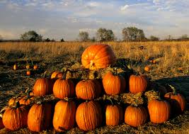Largest Pumpkin Ever by 11 Minnesota Pumpkin Patches Perfect For Your Fall Family