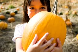 Pumpkin Picking Richmond by Pumpkin Picking U2022 Sun U2022 10 19