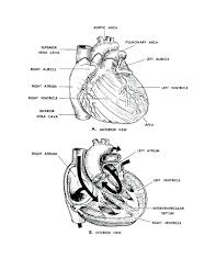 Heart Wings Coloring Pages Valentines Book Human Body Colouring