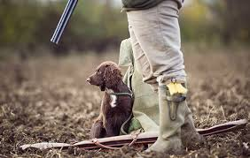 How To Get Your Gundog Sit