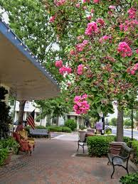 138 best Clovis California Town & Country My home images on