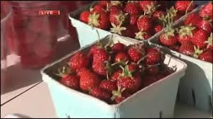 Grims Greenhouse Pumpkin Patch by Strawberry Picking At Grim U0027s Orchard And Family Farms Wfmz