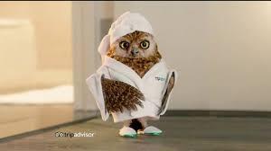 TripAdvisor TV Commercial Early Bird