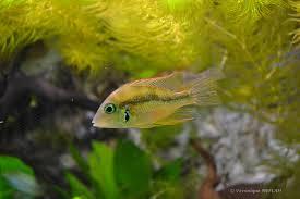 palais de la porte dorée et l aquarium tropical les cichlidés