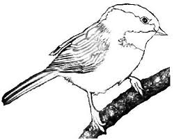 Capped clipart black and white 1