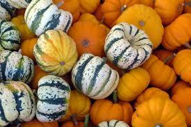 Sacramento Delta Pumpkin Patch by Medusa U0027s Kitchen September 2013