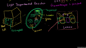 Conceptual overview of light dependent reactions video
