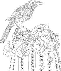 Free Printable Coloring PageArizona State Bird And Flower Cactus Wren