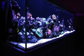 aquarium nano eau de mer aquarium eau de mer аквадизайн aquariums
