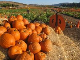 Pumpkin Patch Irvine University by Four Places For U Pick Pumpkins From A Farm Oc Weekly