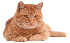 popular cat names common cat names naming cats unique unisex