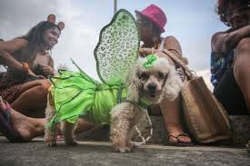 Old Westbury Gardens Dog Halloween by 7 Of The Cutest Pet Costumes For Halloween
