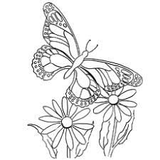 Flying Queen Butterfly Coloring Pages