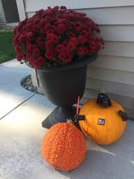 Spookley The Square Pumpkin Book Amazon by From Here To Zehr