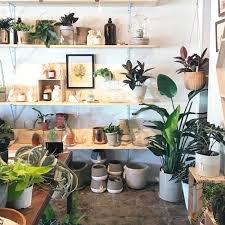 Dracaena Tree Bonsai Seeds Plants Flower Perennial For Rare Indoor