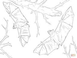 Bats Coloring Pages Common Fruit Page Free Printable Online