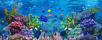 aquarium d eau douce quels sont les types de filtration pour l aquarium d eau douce