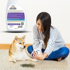 Dog Urine Stains On Hardwood Floors Removal by Amazon Com Petseer Pet Odor Eliminator And Stain Remover Stop