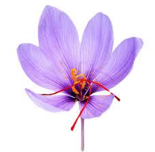 usa customers sativus