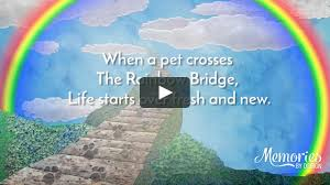100 Memories By Design We Are So Sorry For Your Loss Rainbow Bridge Pet Tribute VIdeo