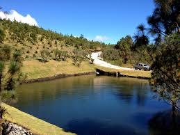 Best Christmas Tree Farms Santa Cruz by A Visit To A Guatemalan Christmas Tree Farm Spaswinefood