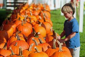 Sarasota Pumpkin Festival Location by Pumpkins Plentiful Thanks To Kind Weather Tbo Com