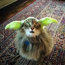 costume for cat diy pet costume ideas popsugar smart living
