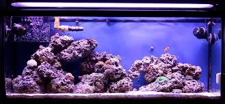 t5 bulb combinations w pictures 3reef aquarium forums