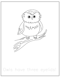 Coloring Pages Of Animals That Hibernate Free Forest At Hibernating