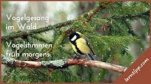 4 stunden vogelgezwitscher vogelstimmen im wald