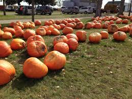 Pumpkin Farm Illinois Best by Negangard Pumpkin Patch Sidney Il