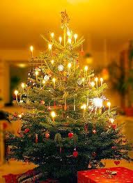 Plantable Christmas Trees Nj by Collection Buying A Christmas Tree Pictures Halloween Ideas