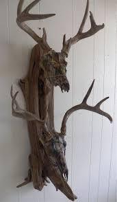 Deer Antler Shed Trap by 50 Best Wall Mounts Images On Pinterest Antler Art Deer Skulls