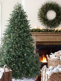 Nordmann Fir Christmas Tree Nj by Norway Spruce By Vermont Signature Balsam Hill