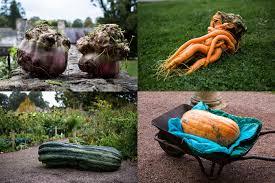 Worlds Heaviest Pumpkin In Kg by The Weird U0026 Wonderful World Of Giant Vegetables The Happy Gardeners