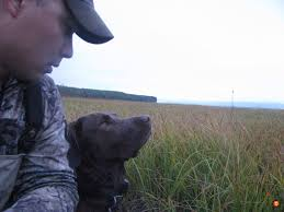Chesapeake Bay Retriever Shed Hunting by What Is The Best Hunting Dog Breed For Alaska Poll