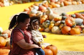 Real Pumpkin Patch Dfw by Fun Places To Pick Pumpkins In Dallas Fort Worth Guidelive