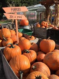 Canby Pumpkin Patch by Fir Point Farms Oregon Haunted Houses
