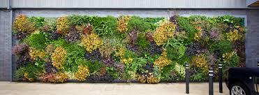 Green Wall Benefits ECO BROOKLYN
