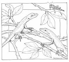 Nature Coloring Page Colouring Pencil And In Color